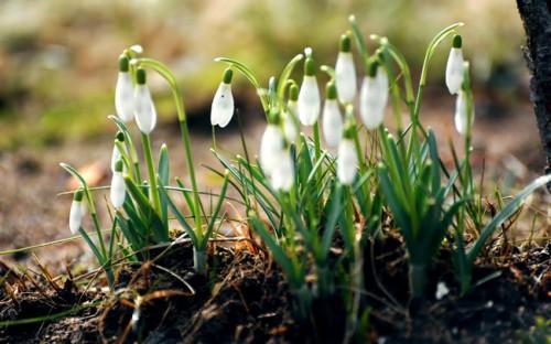 fleurs-blanches.jpg