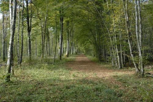 chemin_arbres_18a.jpg