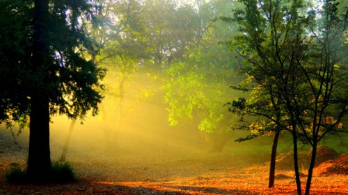 arbres_lumiere_10a.jpg